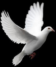¿Por qué es importante rezarle al Espíritu Santo?