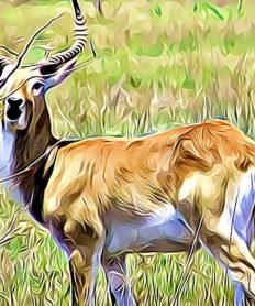 ¿Cuáles son las características de los animales vertebrados?