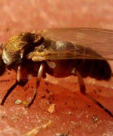 Las moscas y los distintos daños que pueden causar